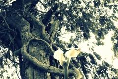 Albero in bianco e nero con effetto cross process