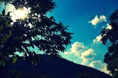 Alberi e cielo con effetto cross process