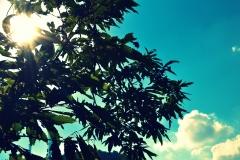 Altro albero con effetto cross process