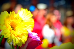 fiore al concerto blubordoux con effetto