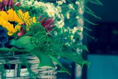 Fiori per decorare