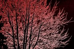 alberi con effetto neon