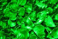 Verde su foglie