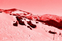 rosa su neve