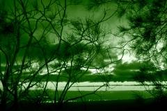 verde su alberi