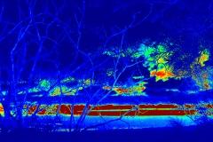 Effetto termico su alberi e paesaggio