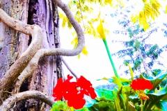 Fiori e alberi
