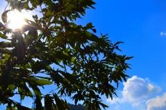 Albero e cielo