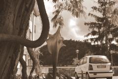 albero e auto