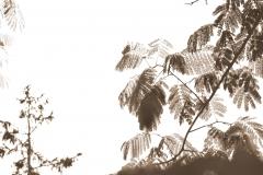 foglie, color seppia