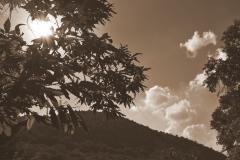 alberi e nuvole