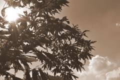 alberi e nuvole, cielo
