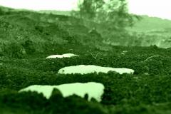 verde su montagna