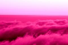 violetto su cielo